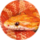 navigation-corn-snake-circle