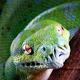 navigation-python-circle